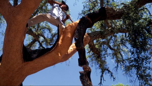 Возобновляемый материал - кора пробкового дуба